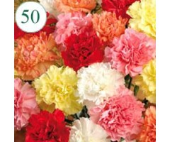 https://www.emotiongift.com/50MixcolorCarnations
