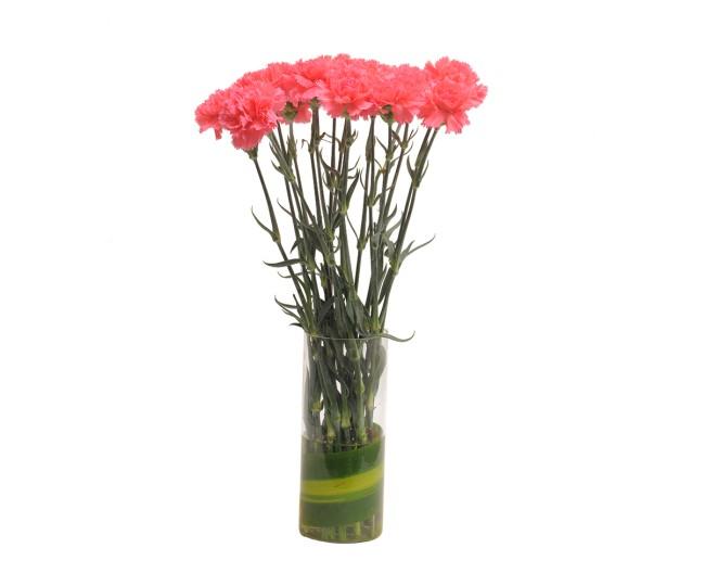 Pink Carnations N Vase