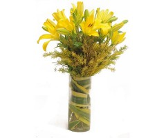 Yellow Asiatic Lilies