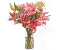 Pink Oriental